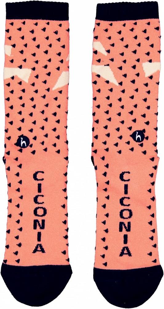 Ciconia-014 cópia